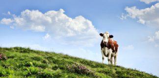 Cow 3466106 1280 324x160