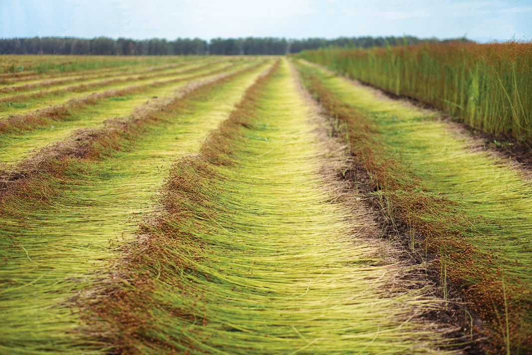 Inflexible Flax The Only Flax Refiner In Ukraine Is Planning To Abandon This Crop