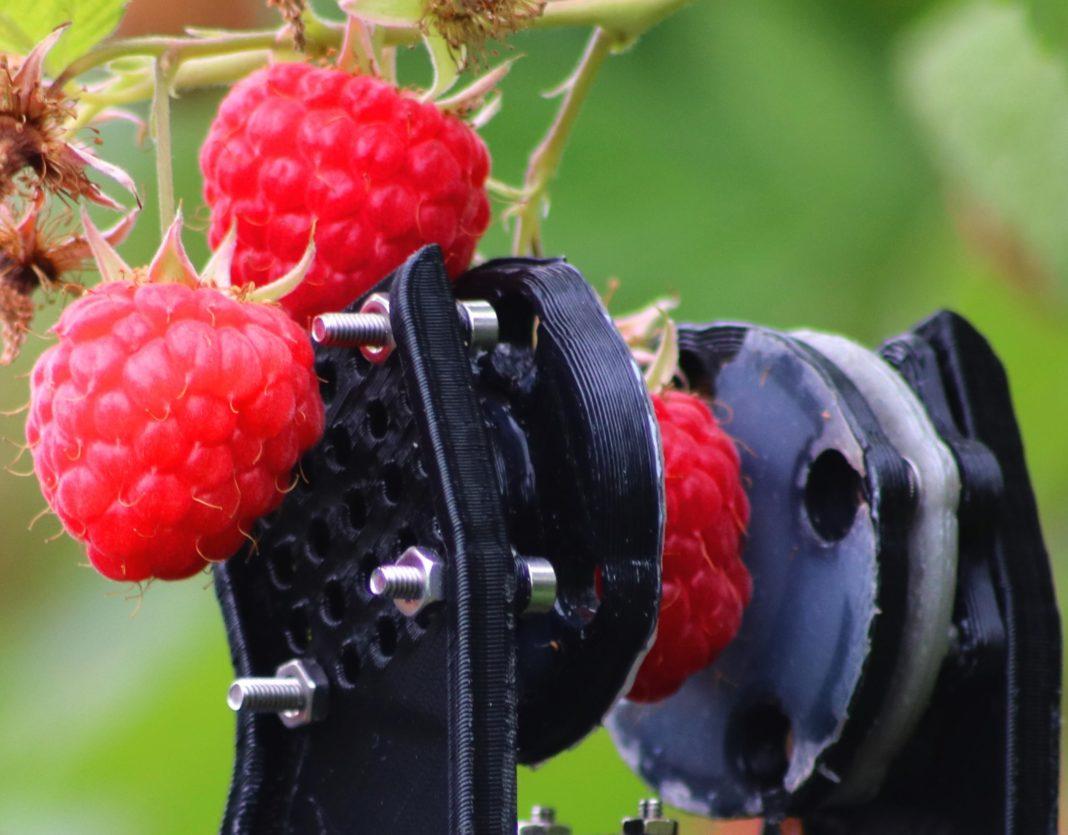 Berry Machine Universal Robot Picks Raspberries Three Times Faster Than Humans