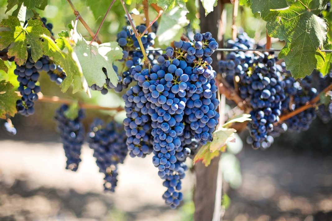 Purple Grapes 553464 1280 1068x712