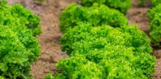 Salad 3519389 1280 324x160
