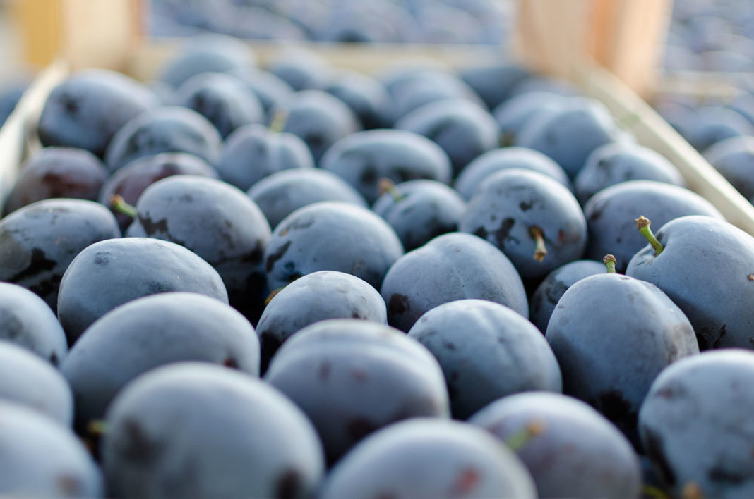We Re Losing It The Prices For Autumn Fruits Are Extremely Falling Plum Has Fallen The Most