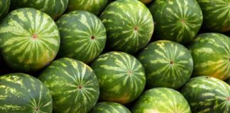 Watermelons 324x160