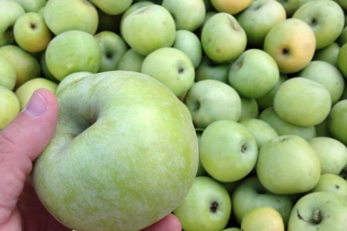 Gala Concert Gardeners Will Get A Better Price For Gala Apples And Semirenko Will Be Sold For Nothing
