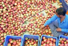 Apple Farmers In Himachal 218x150