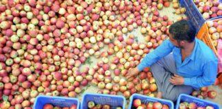 Fruit Booze In Transcarpathia A Small Enterprise Will Officially Produce Fruit Vodka