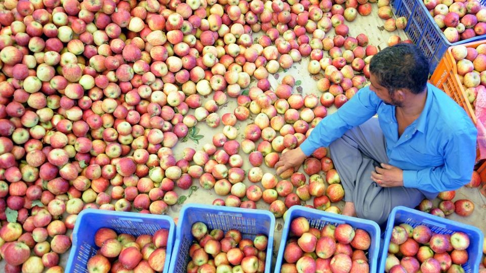 Apple Farmers In Himachal
