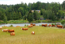 Sweden Grasslands Cow Forests Rivers Katrineholm 527994 1920x1200 218x150