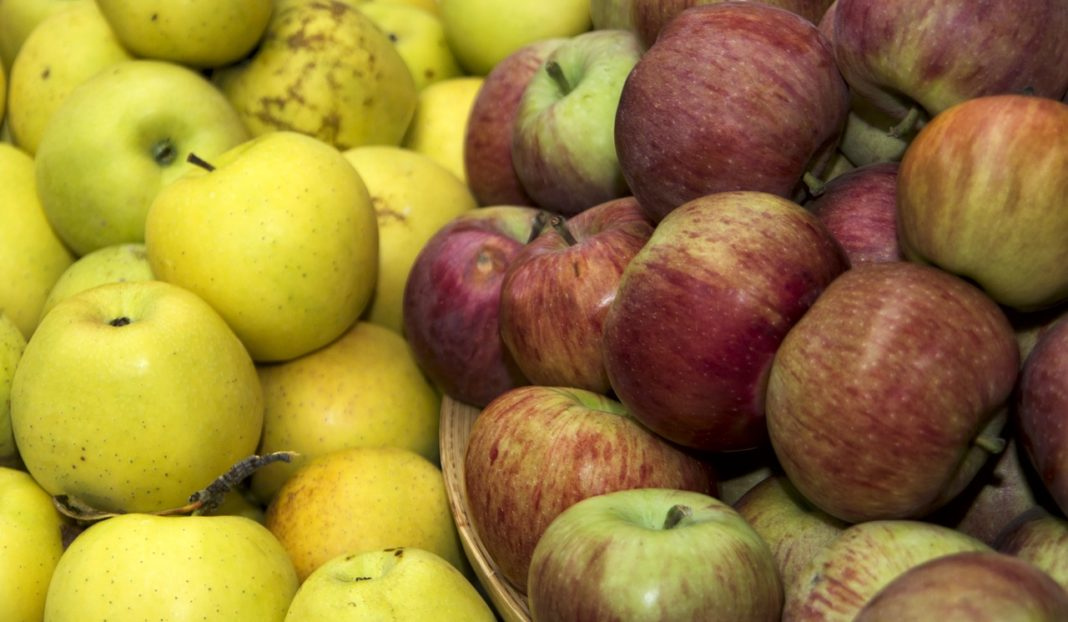 Faded Vitamins A Lot Of Apples And Pears Will Not Last Until Winter Due To Poor Quality