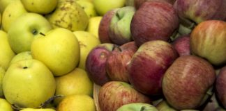 Apples 3713575 1280 324x160