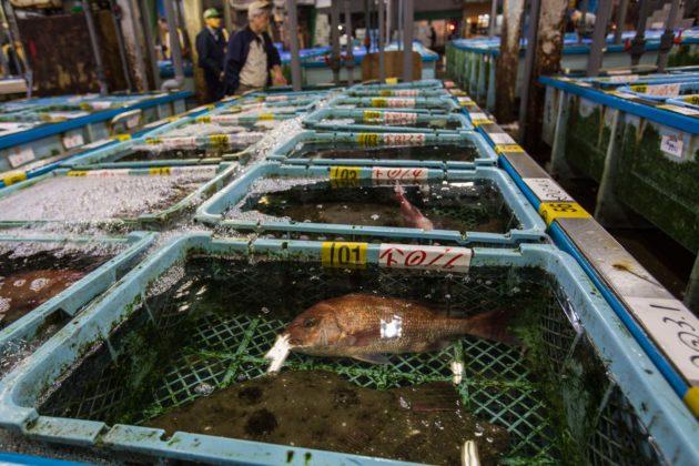 Fishmarket003 630x420
