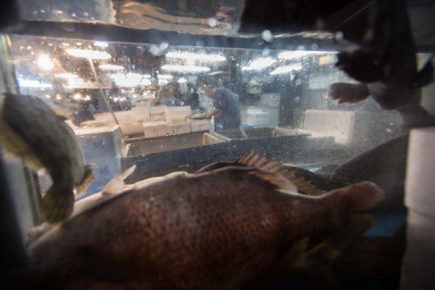 Fishmarket004 630x420
