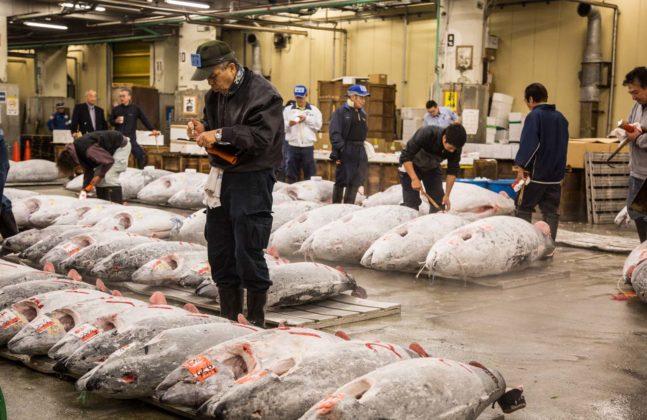 Fishmarket009 647x420