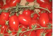 Squashed Tomato The Export Of Tomatoes From Ukraine Has Become The Lowest In 5 Years