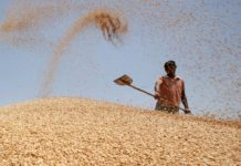 India Wheat 2013 218x150