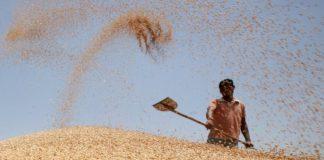 India Wheat 2013 324x160