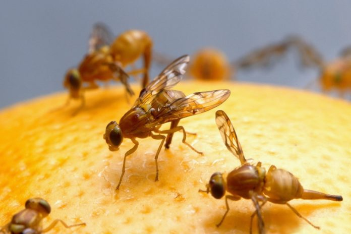To Hurt A Fly The Gene Drive Changes Not Plants But Pests Making Them Harmless