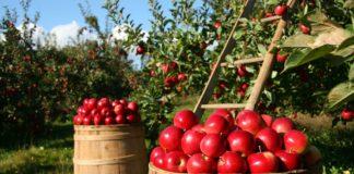 Orchard 1872997 1280 324x160