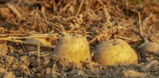 Potatoes 3690562 1280 324x160