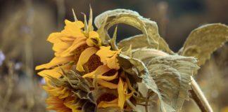 Sunflower 3710166 1280 324x160