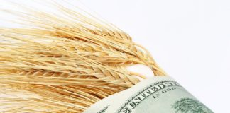 Wheat And Dollars Bigstockphoto 900x600 324x160