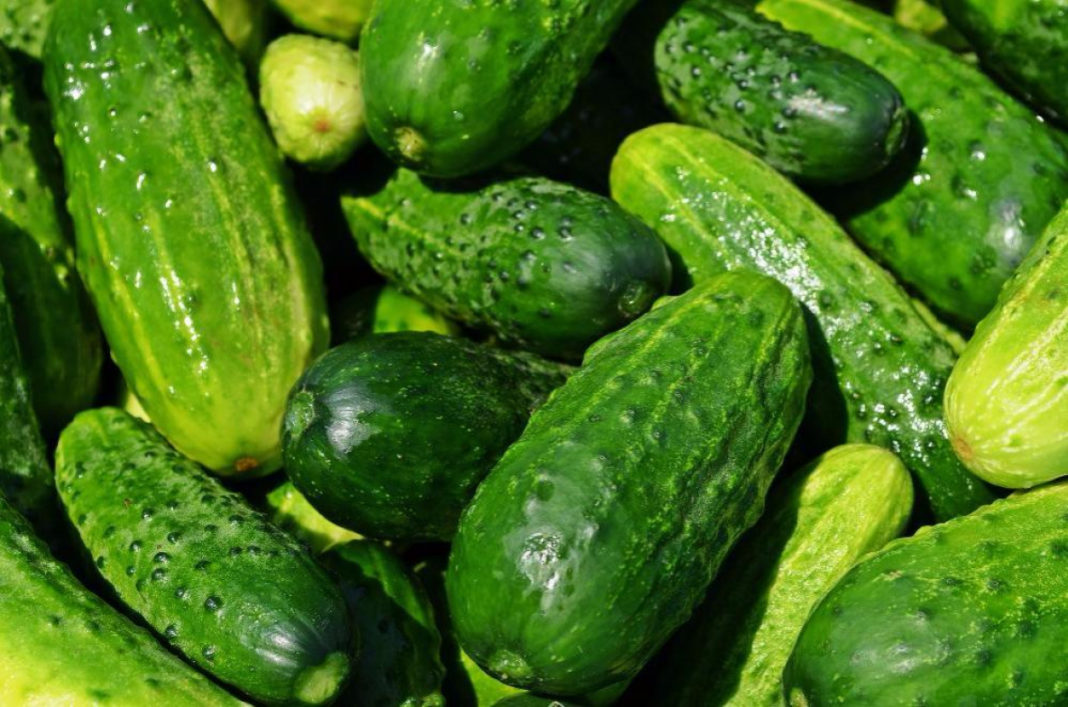 Pickles In The Networks Of Ukraine Cucumbers Reached 40 Uah Because In Spain They Cost 20 Uah