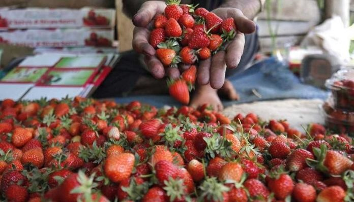 Taking Warsaw Poland Has Become The Largest Market For Ukrainian Berries