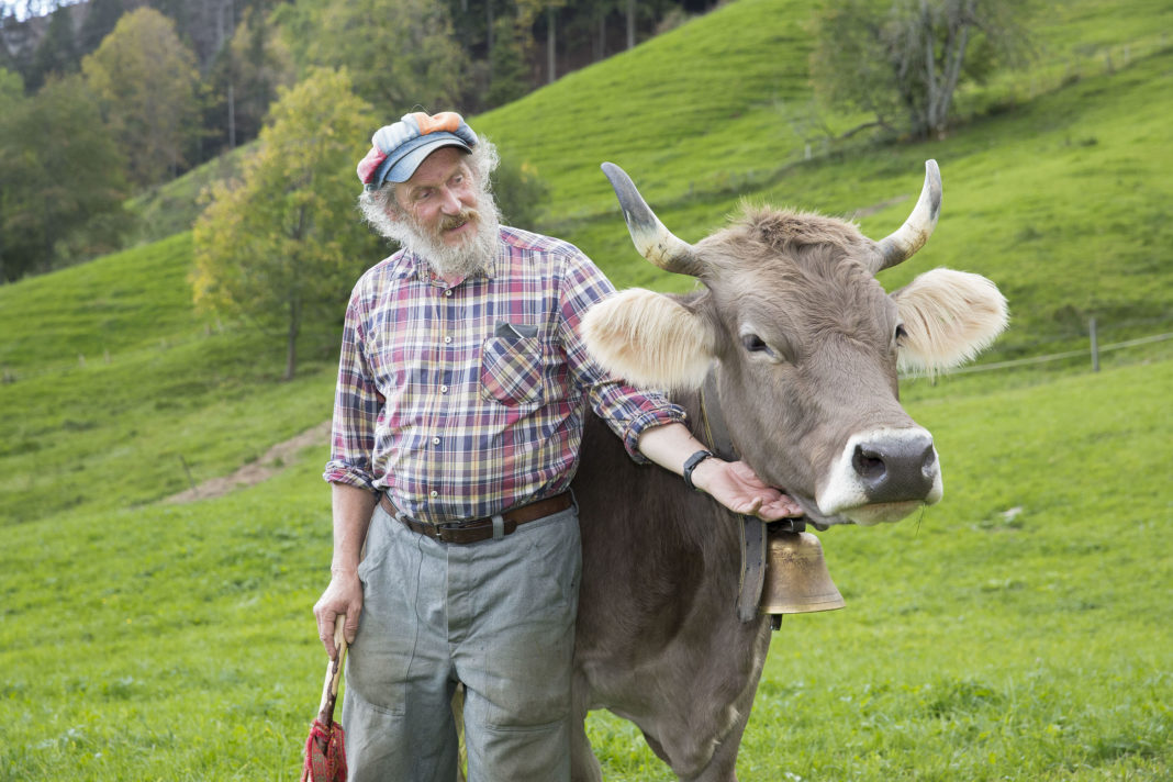With Horns Against A Wall Switzerland Is To Decide In A Referendum Whether To Leave The Horns To The Cows