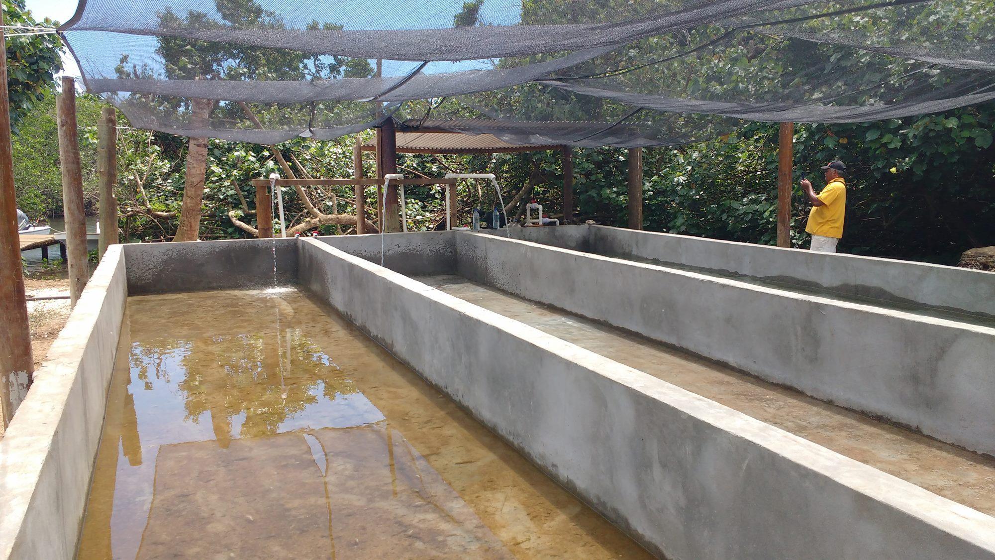Civa Fiji Pearls Giant Clam Farming 0