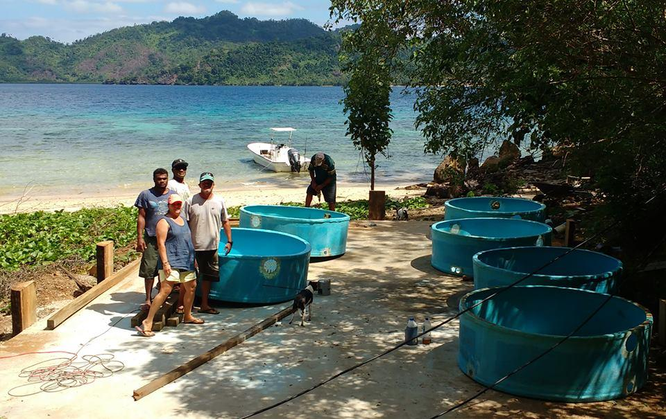 Civa Fiji Pearls Giant Clam Farming 31