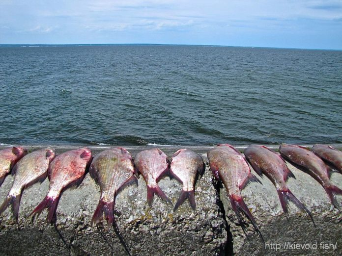 Fish Coma Fishermen Did Not Catch 45 Of Fish In The Kiev Reservoir
