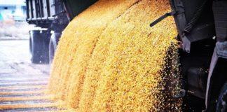 Latifundistcom Seeds 03 324x160