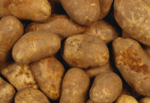 Gilded In Ukraine Potatoes Began To Rise In Price Farmers Expect To Save The Trend