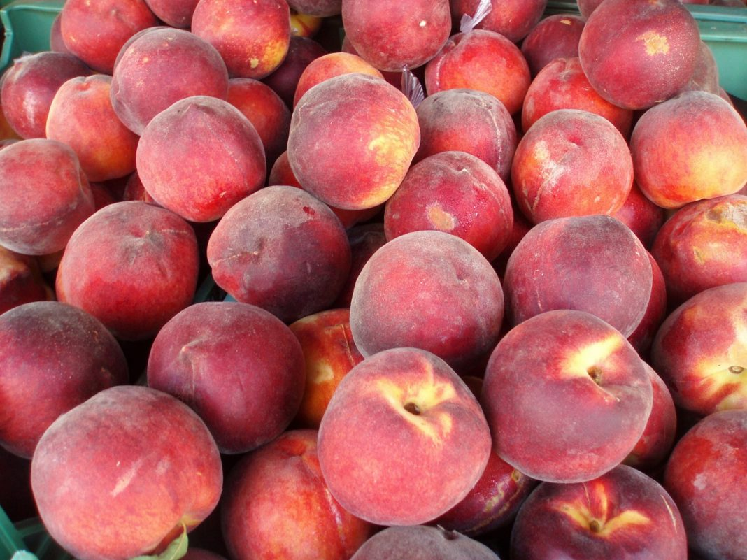 Peach Perspective The Profitability Of Peaches Can Reach 40 In A Difficult Season It May Be 12