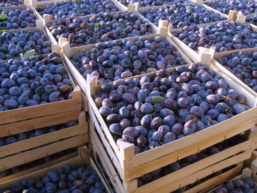 Like A Ripe Plum Ukraine Activates Imports Of Plums From Moldova Where They Are Ten Times Cheaper