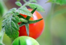 Bothers Slavs Belarusians Arrested Ukrainians And Russians For Traffic Of Tomatoes And Apples To The Russian Federation