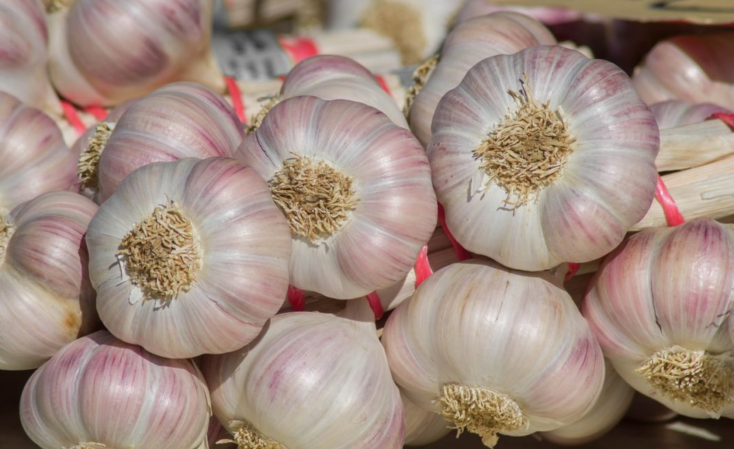 Garlic 3646572 1280 1068x654