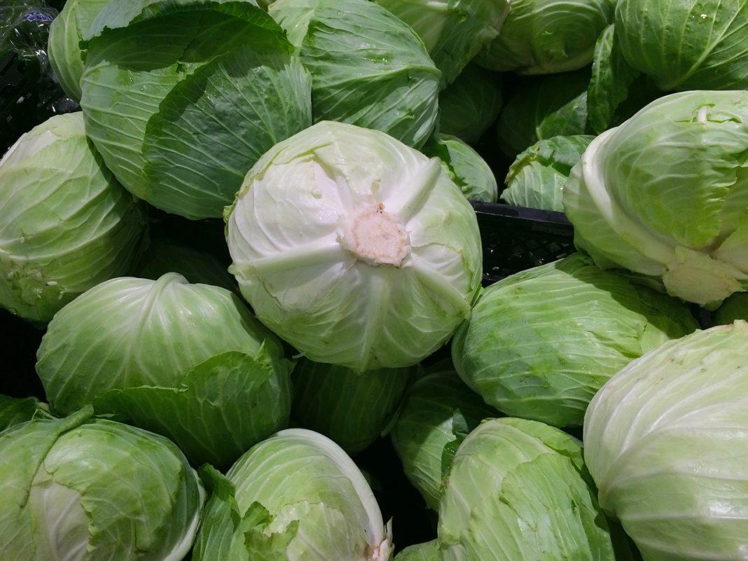 Cabbage 1666765 1280 1068x801