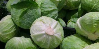 Cabbage 1666765 1280 324x160