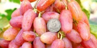 Vynograd 324x160
