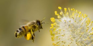 Honey Bee Flowers Widescreen 324x160