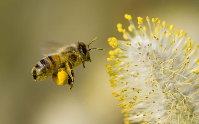 Honey Bee Flowers Widescreen 696x435