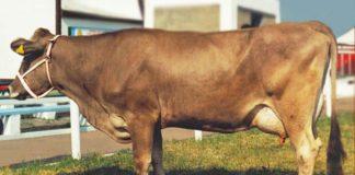 Buroiporodi 324x160
