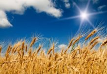 Depositphotos 6169897 Stock Photo Summer Field With Full Grown 218x150