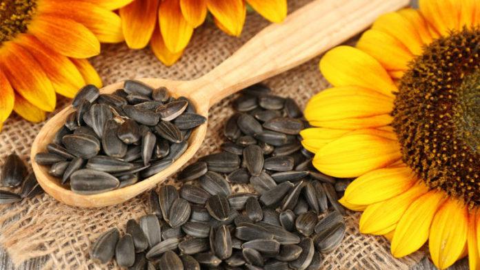 Sunflower 696x392