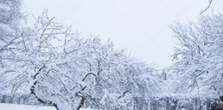 Depositphotos 31415063 Stock Photo Garden And Apple Trees Covered 324x160