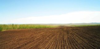 Field Arable Land Lines Ranks Agriculture 54020 1366x768 324x160