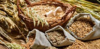 Depositphotos 39047983 Stock Photo Different Types Of Cereal Grains 324x160
