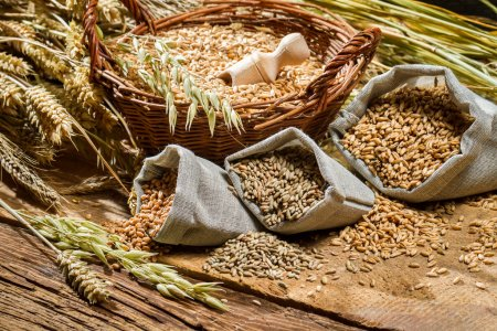 Depositphotos 39047983 Stock Photo Different Types Of Cereal Grains