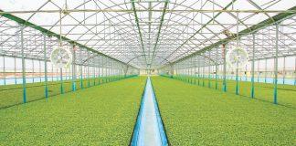 Agrofusion Zbilshyt Ploshhu Pid Tomatamy Na 4